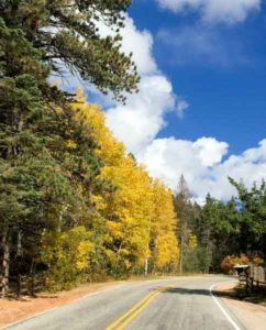 Road along fall colors