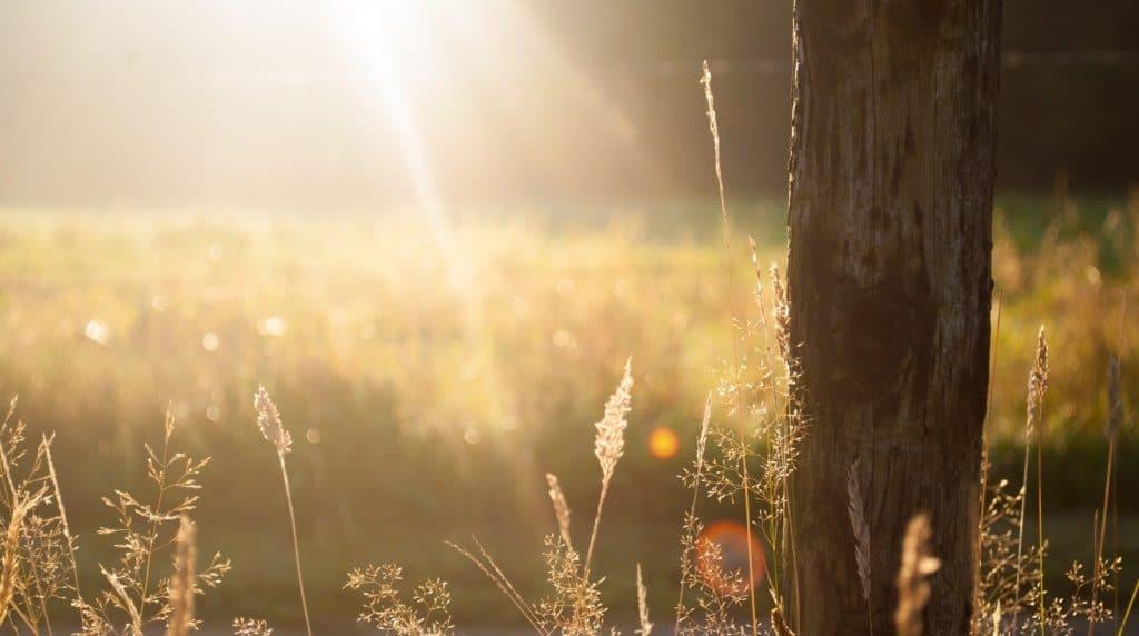field summer sun meadow