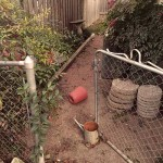 Tending the Neglected Creative Side Yard